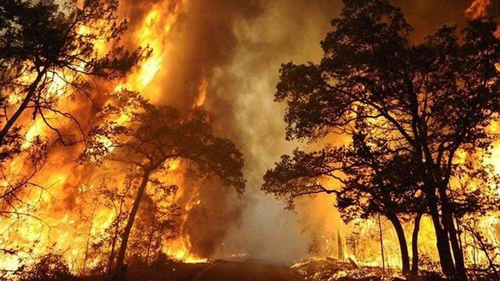 Daha Şiddetli ve Sık Yangınlar Ormanların Karbon Tutmasını Azaltabilir - İklim Haber